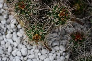 Jardín de piedras y cactus